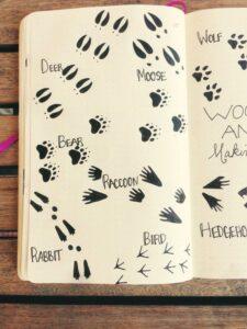bullet journal animales ideas
